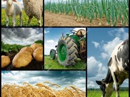 14485589-Agricultura-collage-Vaca-ovejas-trigo-cebolla-papa-un-tractor-Foto-de-archivo